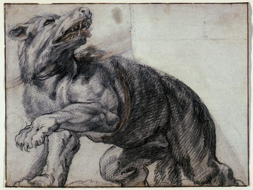 Frans Snyders, The Wolf (after Rubens' Whitehall Ceiling), date unknown. Red and black chalk on laid paper, Art Gallery of Ontario.
